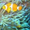 poissons-daqua