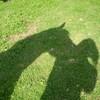 hest-keres
