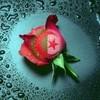 Algeryenne1083