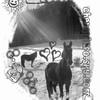 cheval-info