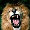 simo-tigr