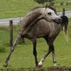 chevalstar-lemagazine