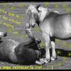 horsethebest01
