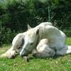 x-blog-chevaux