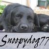 snoopydog77
