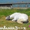 mandariin3--x