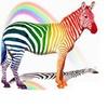 rainbow-zebra