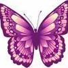 butterfly7727