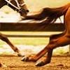 avendre--equitation
