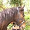 equitation-and-me