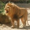 lion-dismailia