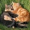 lovecats38