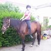 materiel-chevaux-poney