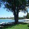 Flo-hawaii