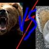 ours-vs-ecureuil