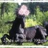 X-Magnifik-Horses-x