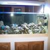 aquarium027