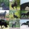 chevaux9