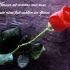 kaoutar-rose
