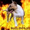 bulldogzer