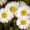 thelittleflowers