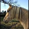 Soleil-Equestre