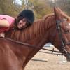 fsh-cheval
