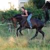 la-chieuse-vs-chevaux