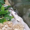 bebe-grenouille