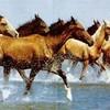 amis-des-chevaux366