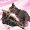 cote-love