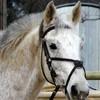 materiel-equitation2