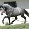x-races-de-horses-x