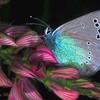 butterflyworld1