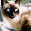chatons5