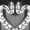 abbylly-snakes