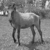 dadou-horse