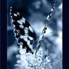 miss-papillon001