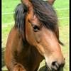 passion-chevaux13700