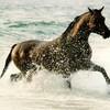 concour-chevaux13