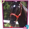 poneys-chevaux-67230