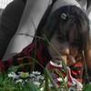lily-kiten