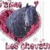 cheval-ma-passion