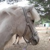 La-vie-equine
