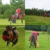 Pony-gogo