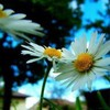BeautifulxPhotos