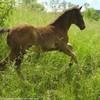 Une-vie-un-cheval