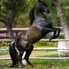 concours-de-cheval
