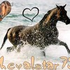 chevalstar73
