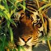 Xx--tigre9543--xX